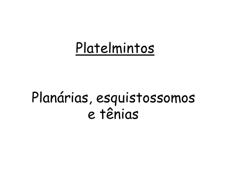 Planária Tênia Esquistossomo