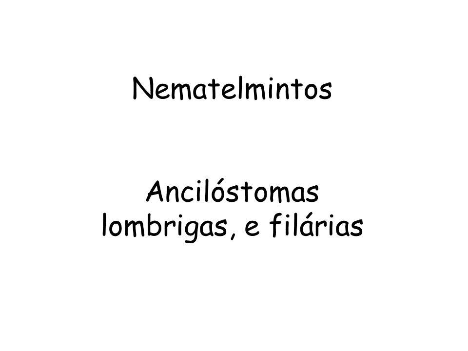Nematelmintos Ancilóstomas lombrigas, e filárias