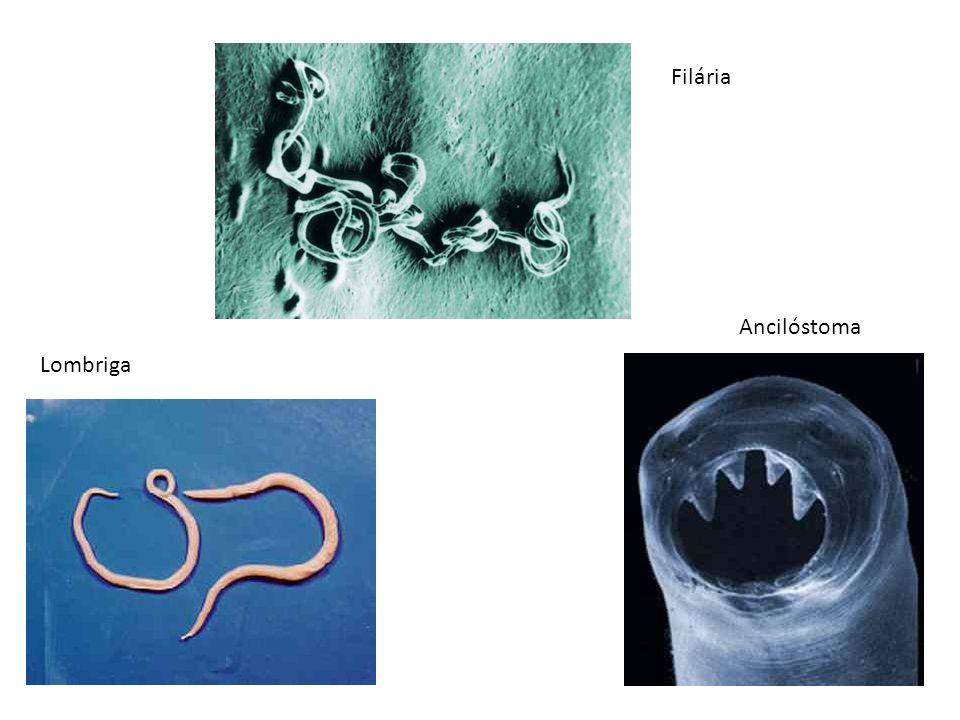 Filária Ancilóstoma Lombriga