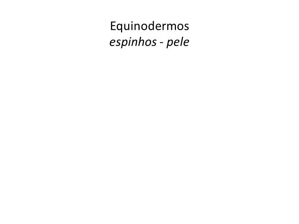 Equinodermos espinhos - pele