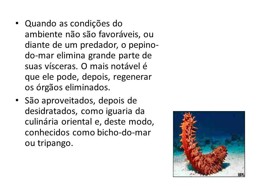 Quando as condições do ambiente não são favoráveis, ou diante de um predador, o pepino- do-mar elimina grande parte de suas vísceras. O mais notável é