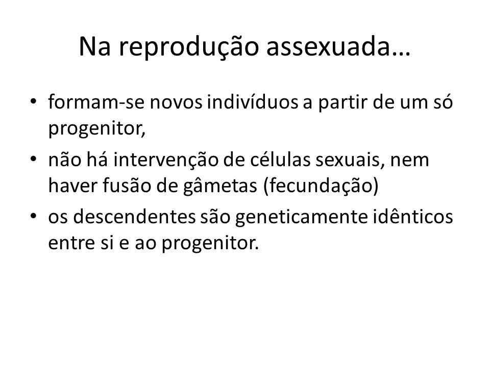 Na reprodução assexuada… formam-se novos indivíduos a partir de um só progenitor, não há intervenção de células sexuais, nem haver fusão de gâmetas (f