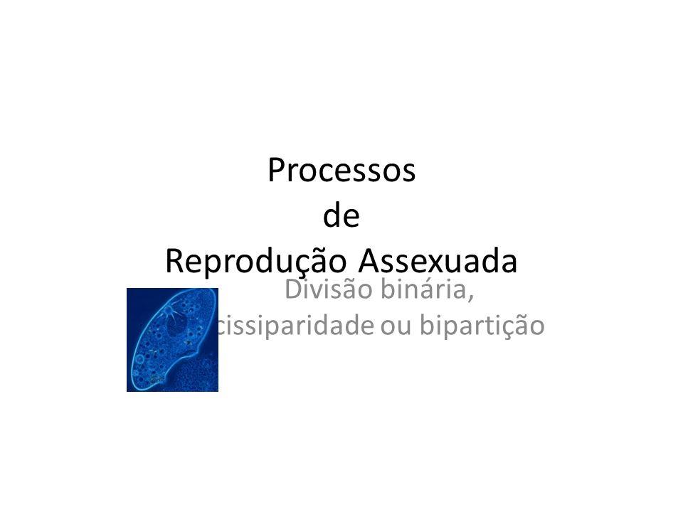 Processos de Reprodução Assexuada Divisão binária, cissiparidade ou bipartição