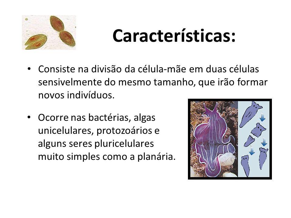 Características: Consiste na divisão da célula-mãe em duas células sensivelmente do mesmo tamanho, que irão formar novos indivíduos. Ocorre nas bactér