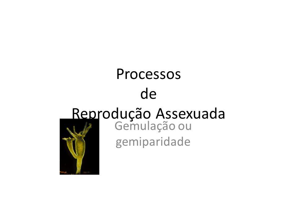 Processos de Reprodução Assexuada Gemulação ou gemiparidade