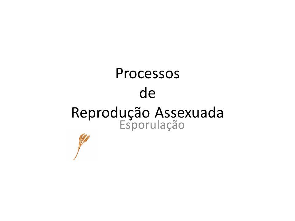Processos de Reprodução Assexuada Esporulação