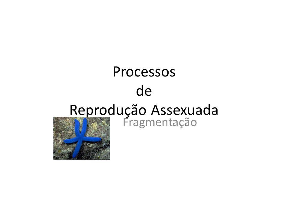 Processos de Reprodução Assexuada Fragmentação
