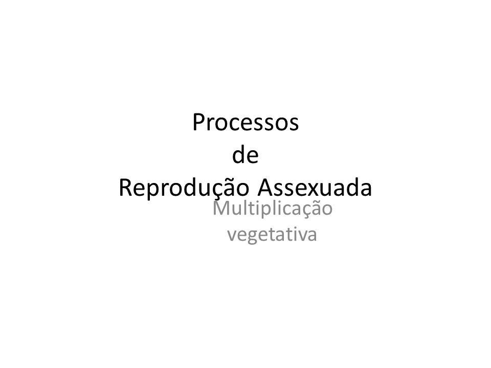 Processos de Reprodução Assexuada Multiplicação vegetativa