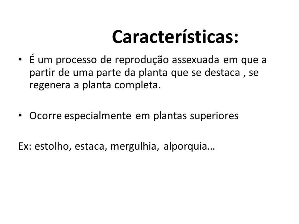 Características: É um processo de reprodução assexuada em que a partir de uma parte da planta que se destaca, se regenera a planta completa. Ocorre es