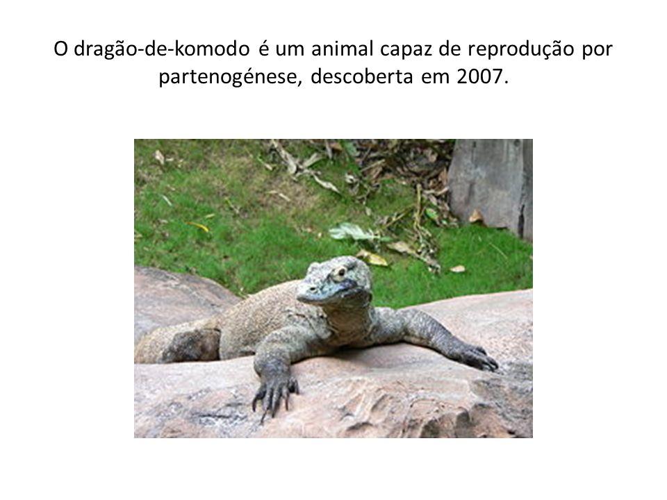 O dragão-de-komodo é um animal capaz de reprodução por partenogénese, descoberta em 2007.