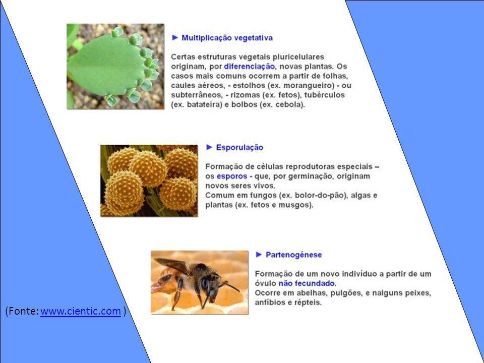 (Fonte: www.cientic.com )www.cientic.com