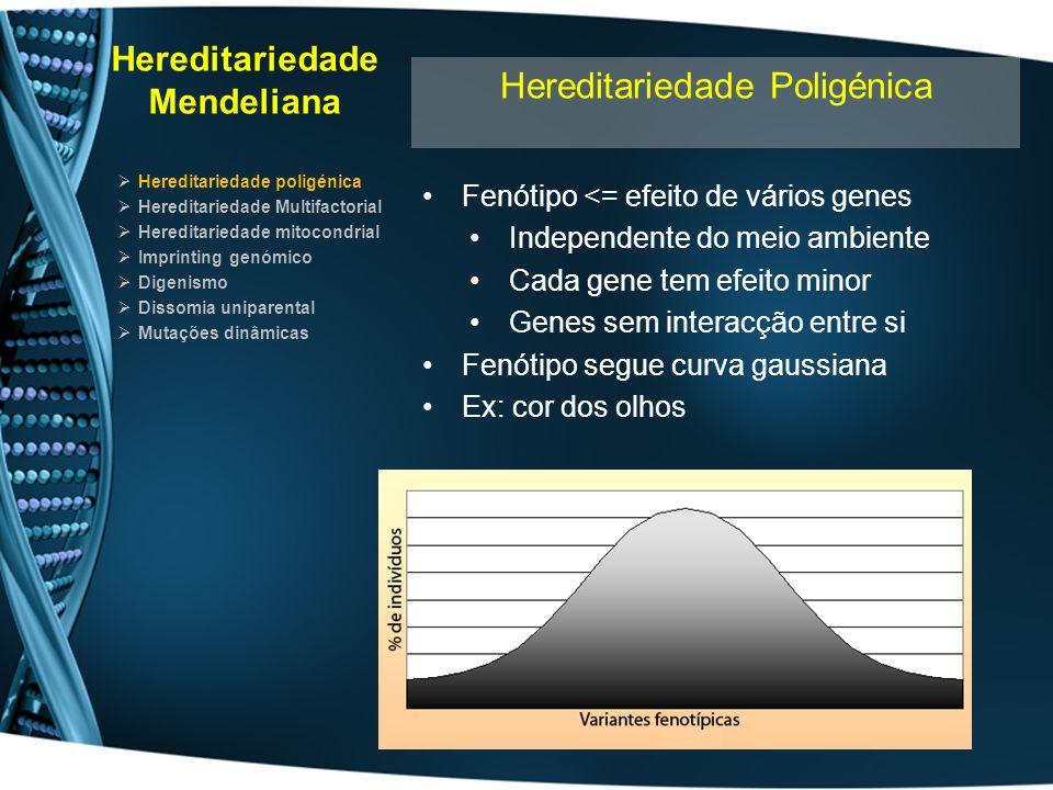 Hereditariedade Mendeliana Hereditariedade poligénica Hereditariedade Multifactorial Hereditariedade mitocondrial Imprinting genómico Digenismo Dissomia uniparental Mutações dinâmicas Hereditariedade Multifactorial Fenótipo resulta de: Efeito aditivo de vários genes Efeito do ambiente Nenhum gene se destaca Distribuição segue curva de gauss População tem uma prevalência da patologia Nas famílias afectadas a curva de gauss encontra-se deslocada A Família apresenta maior prevalência O aumento deve-se ao peso dos factores hereditários