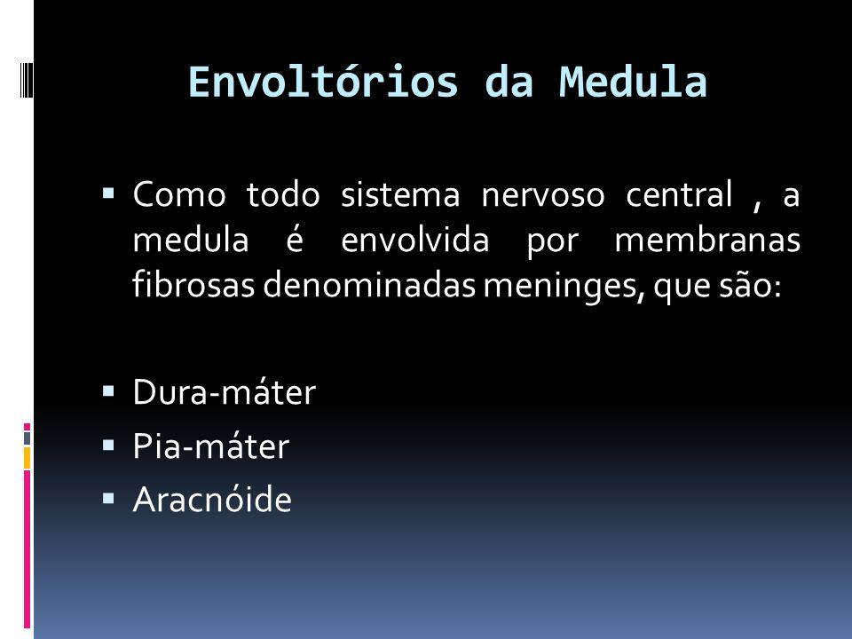 Envoltórios da Medula Como todo sistema nervoso central, a medula é envolvida por membranas fibrosas denominadas meninges, que são: Dura-máter Pia-mát