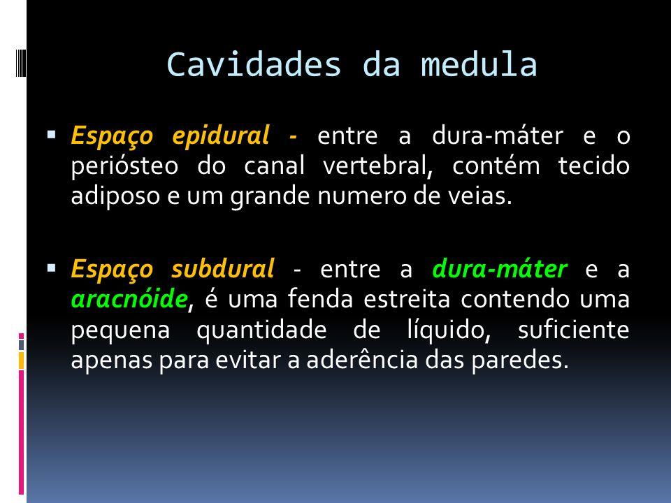 Cavidades da medula Espaço epidural - entre a dura-máter e o periósteo do canal vertebral, contém tecido adiposo e um grande numero de veias. Espaço s