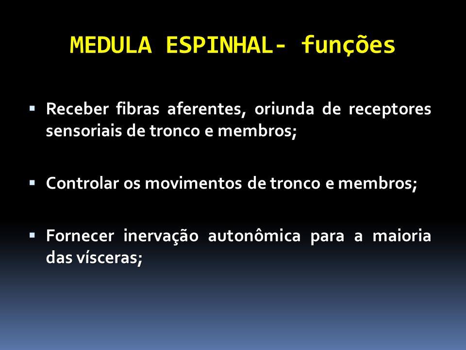 MEDULA ESPINHAL- funções Receber fibras aferentes, oriunda de receptores sensoriais de tronco e membros; Receber fibras aferentes, oriunda de receptor