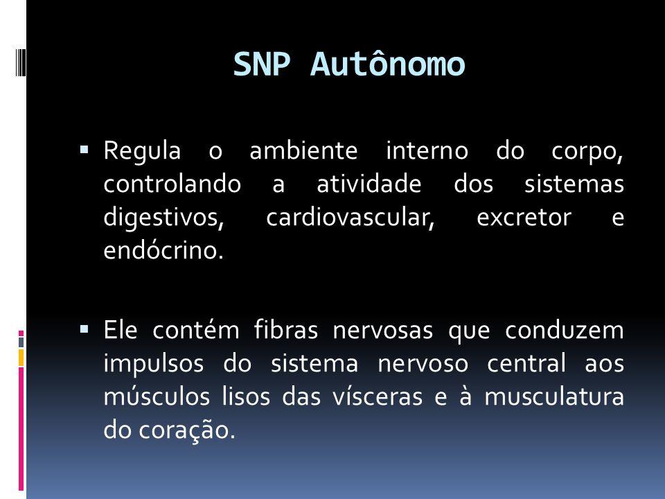 SNP Autônomo Regula o ambiente interno do corpo, controlando a atividade dos sistemas digestivos, cardiovascular, excretor e endócrino. Ele contém fib