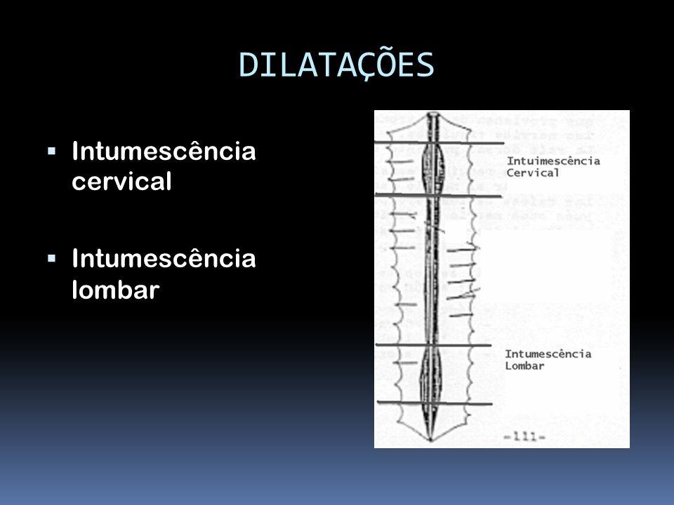DILATAÇÕES Intumescência cervical Intumescência lombar