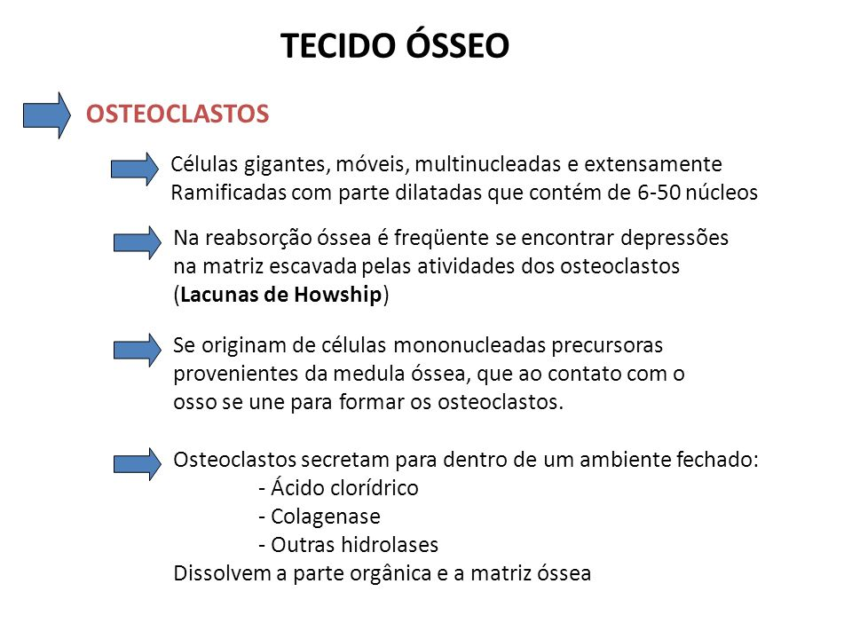 TECIDO ÓSSEO OSTEOCLASTOS Células gigantes, móveis, multinucleadas e extensamente Ramificadas com parte dilatadas que contém de 6-50 núcleos Na reabso