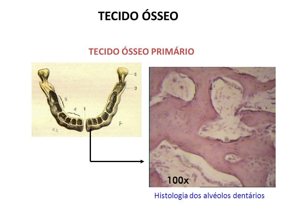 TECIDO ÓSSEO TECIDO ÓSSEO PRIMÁRIO Histologia dos alvéolos dentários