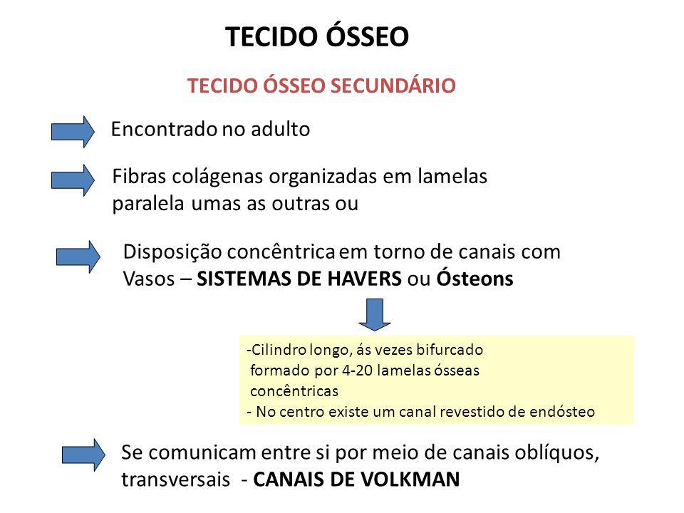 TECIDO ÓSSEO TECIDO ÓSSEO SECUNDÁRIO Encontrado no adulto Fibras colágenas organizadas em lamelas paralela umas as outras ou Disposição concêntrica em