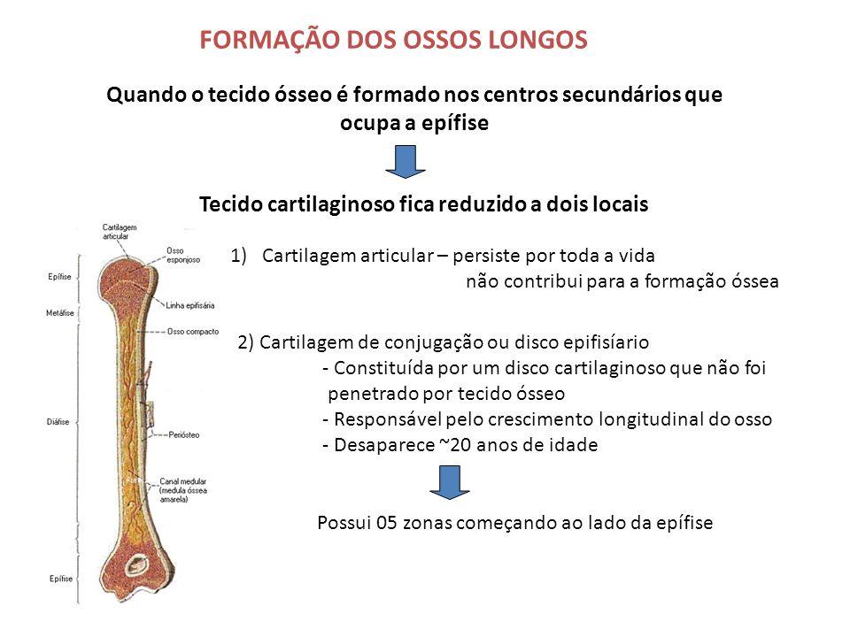 FORMAÇÃO DOS OSSOS LONGOS Quando o tecido ósseo é formado nos centros secundários que ocupa a epífise Tecido cartilaginoso fica reduzido a dois locais