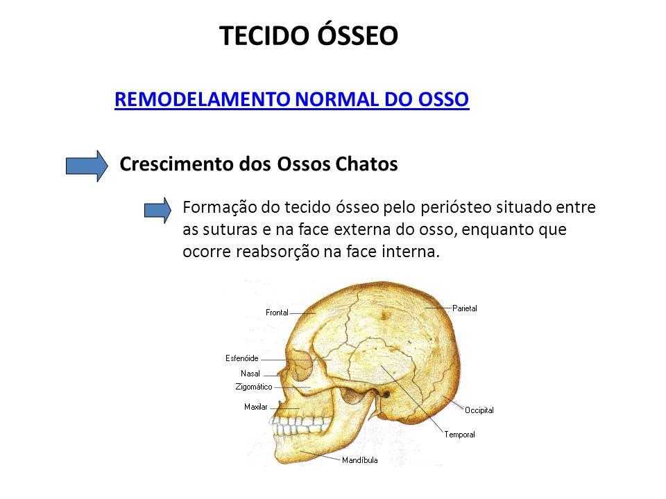 TECIDO ÓSSEO REMODELAMENTO NORMAL DO OSSO Crescimento dos Ossos Chatos Formação do tecido ósseo pelo periósteo situado entre as suturas e na face exte