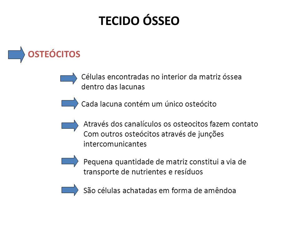 TECIDO ÓSSEO OSTEÓCITOS Osteócito em sua lacuna Osteócito com projeções citoplasmáticas (Microfotografia eletrônica e esquema)