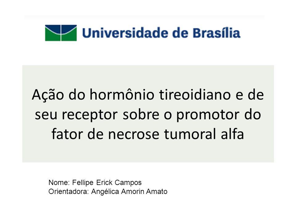 Ação do hormônio tireoidiano e de seu receptor sobre o promotor do fator de necrose tumoral alfa Nome: Fellipe Erick Campos Orientadora: Angélica Amorin Amato