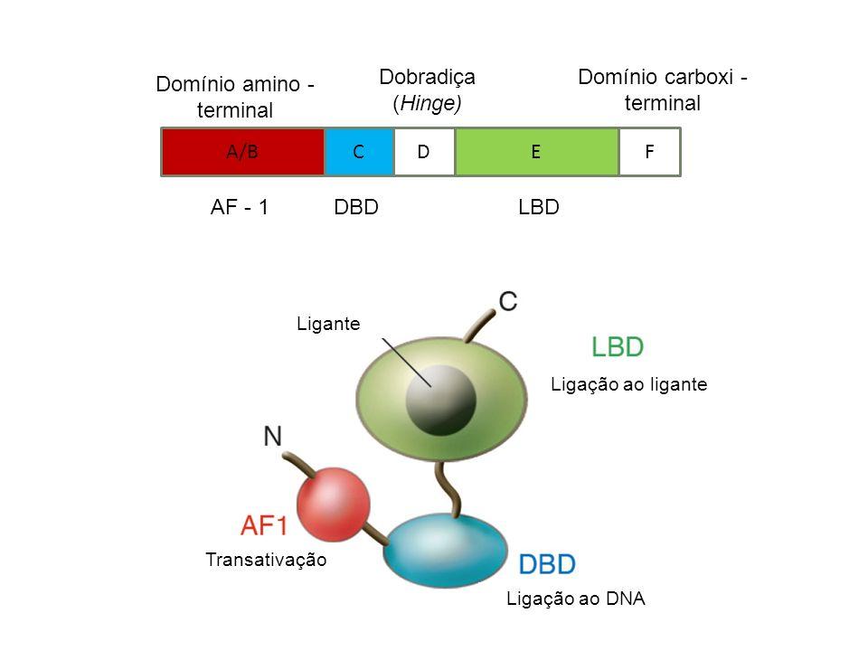 Ligação ao DNA Ligante Transativação Ligação ao ligante A/BCDEF Domínio amino - terminal Dobradiça (Hinge) Domínio carboxi - terminal AF - 1DBDLBD