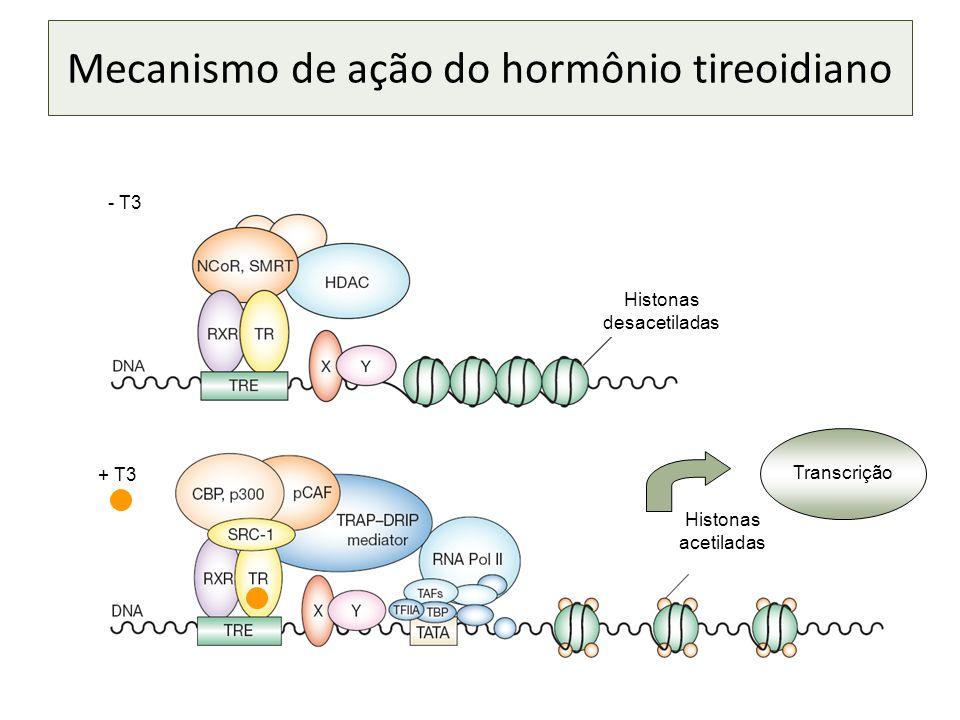 Histonas desacetiladas Histonas acetiladas Transcrição - T3 + T3 Mecanismo de ação do hormônio tireoidiano