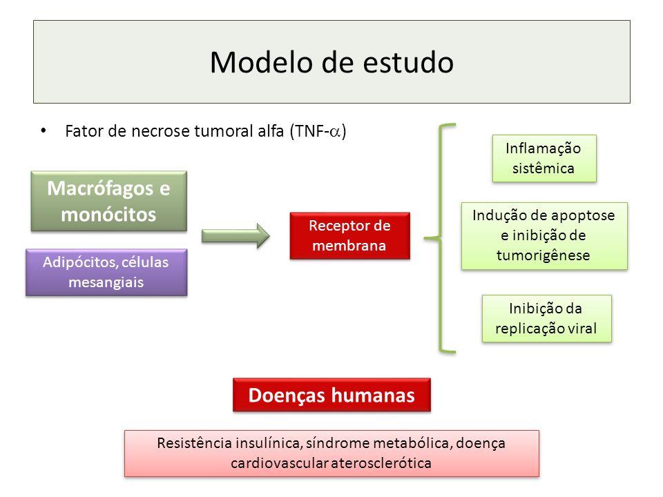 Modelo de estudo Fator de necrose tumoral alfa (TNF- ) Macrófagos e monócitos Adipócitos, células mesangiais Receptor de membrana Inflamação sistêmica Indução de apoptose e inibição de tumorigênese Inibição da replicação viral Doenças humanas Resistência insulínica, síndrome metabólica, doença cardiovascular aterosclerótica