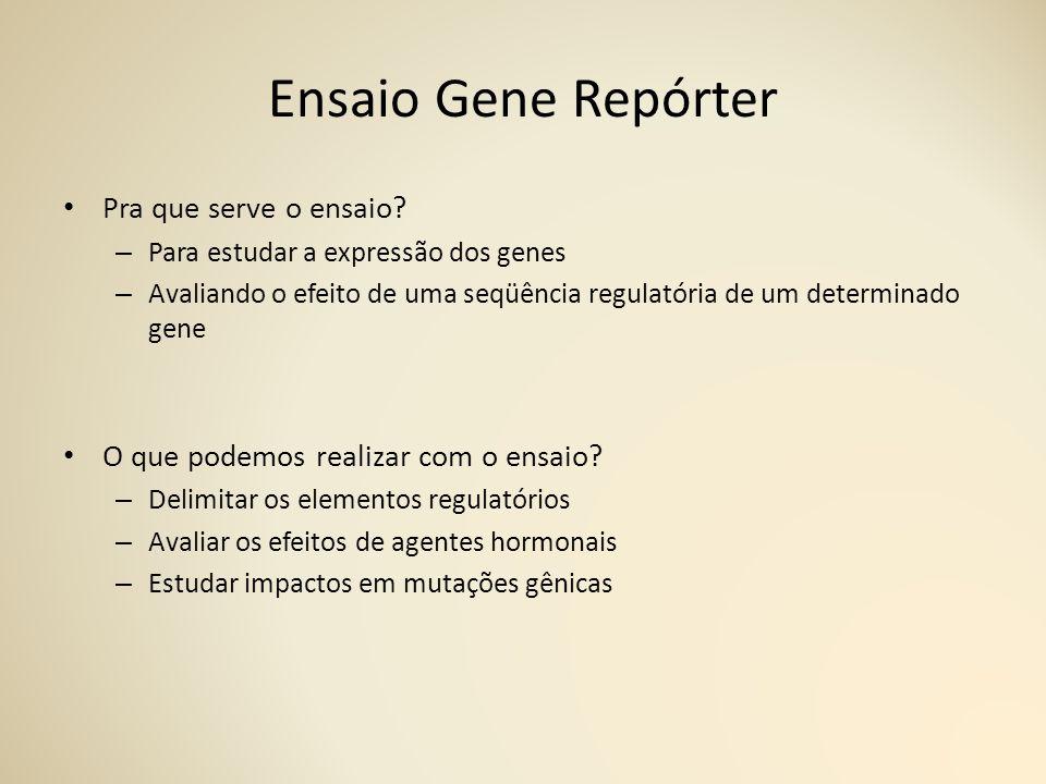 Ensaio Gene Repórter Pra que serve o ensaio.