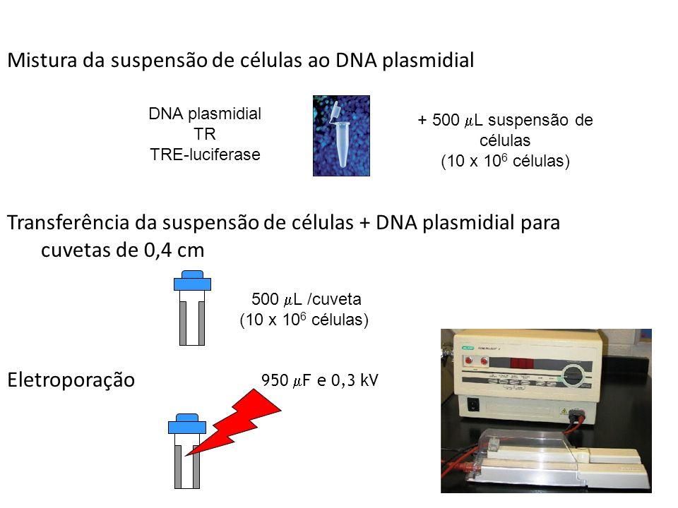 Mistura da suspensão de células ao DNA plasmidial Transferência da suspensão de células + DNA plasmidial para cuvetas de 0,4 cm Eletroporação DNA plasmidial TR TRE-luciferase + 500 L suspensão de células (10 x 10 6 células) 500 L /cuveta (10 x 10 6 células) 950 F e 0,3 kV