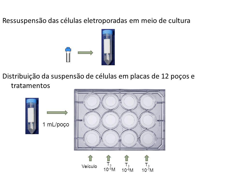 Ressuspensão das células eletroporadas em meio de cultura Distribuição da suspensão de células em placas de 12 poços e tratamentos 1 mL/poço Veículo T 3 10 -5 M T 3 10 -6 M T 3 10 -7 M