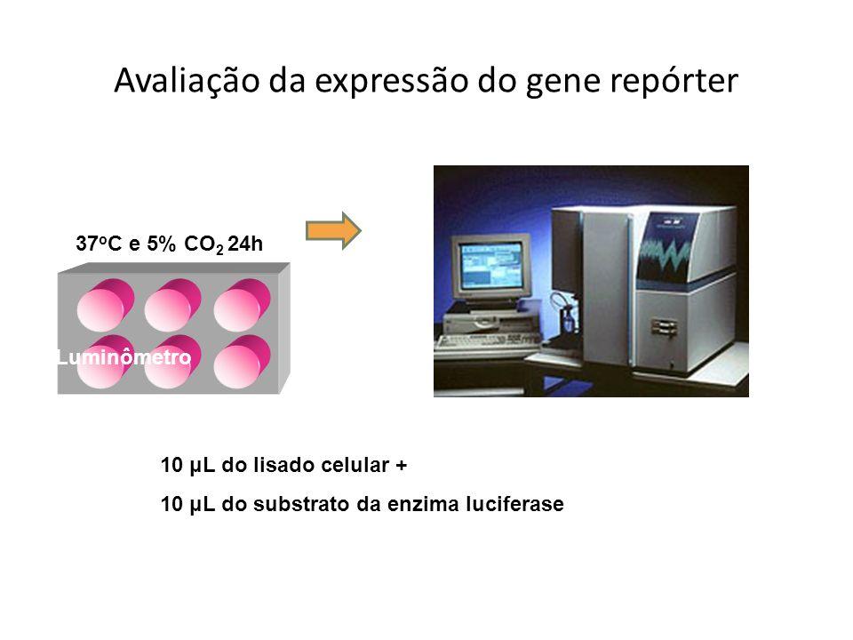 Avaliação da expressão do gene repórter 37 o C e 5% CO 2 24h 10 μL do lisado celular + 10 μL do substrato da enzima luciferase Luminômetro