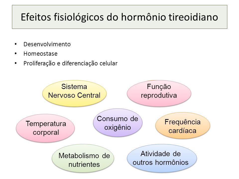 Desenvolvimento Homeostase Proliferação e diferenciação celular Efeitos fisiológicos do hormônio tireoidiano SNC Temperatura corporal Consumo de oxigênio Frequência cardíaca Metabolismo de nutrientes Sistema Nervoso Central Atividade de outros hormônios SNC Função reprodutiva