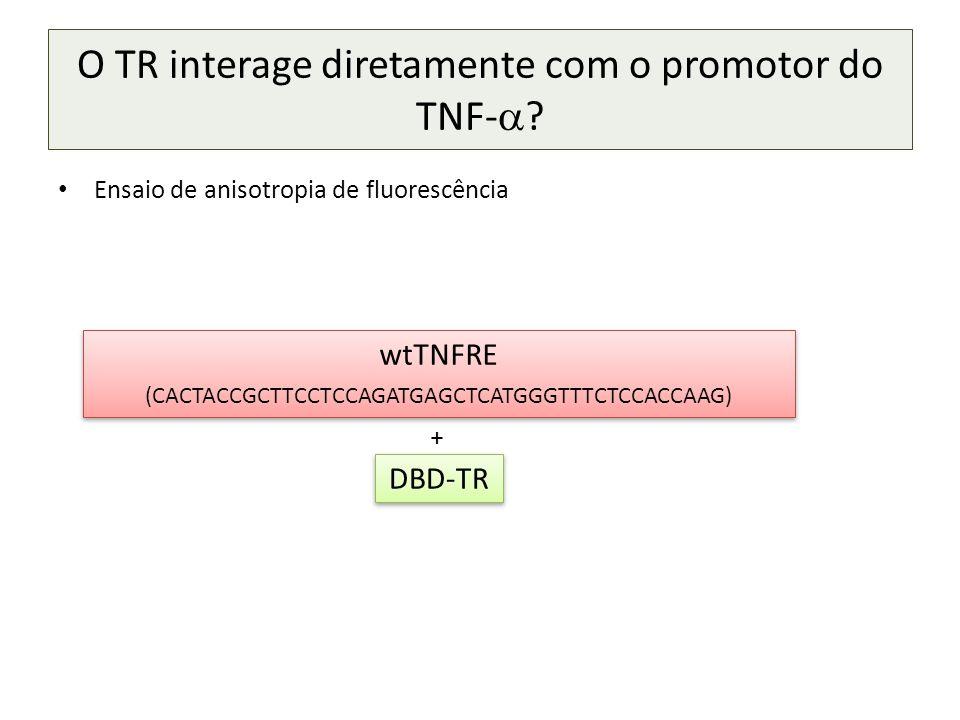 O TR interage diretamente com o promotor do TNF- .