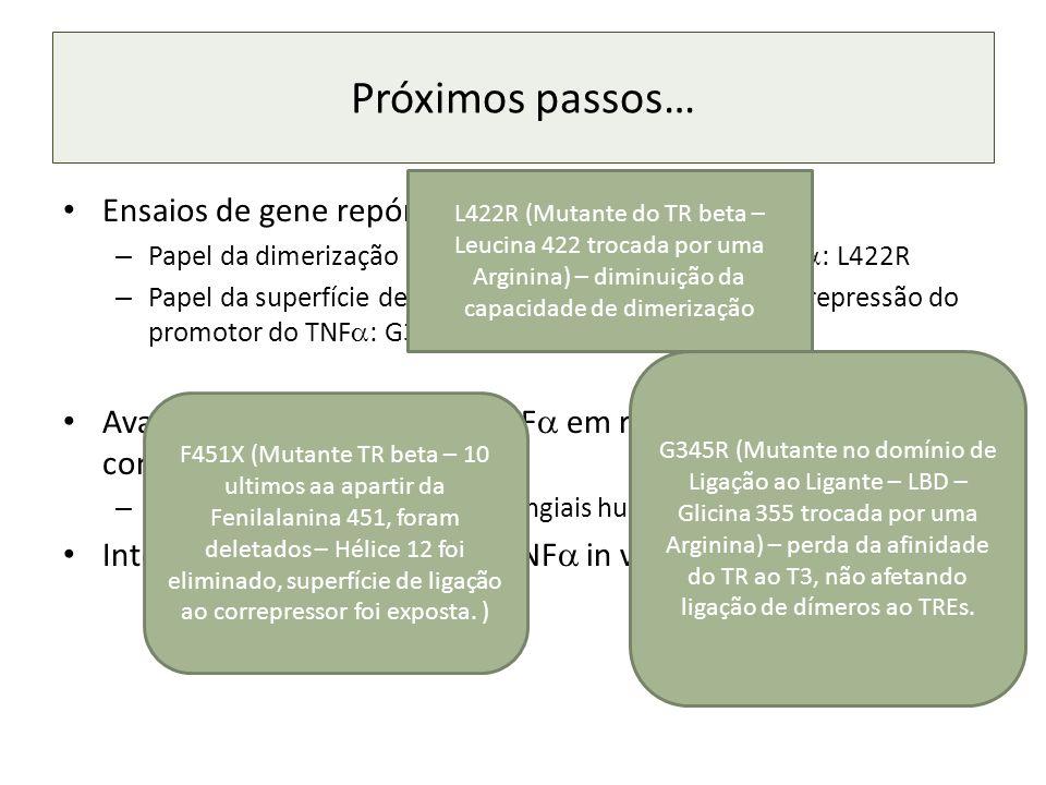 Próximos passos… Ensaios de gene repórter com mutantes do TR – Papel da dimerização na repressão do promotor do TNF : L422R – Papel da superfície de interação com correpressores na repressão do promotor do TNF : G345R e F451X.