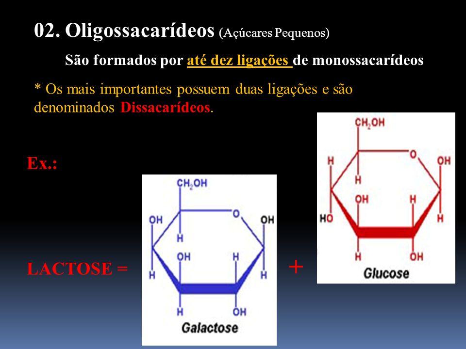 02. Oligossacarídeos (Açúcares Pequenos) São formados por até dez ligações de monossacarídeos * Os mais importantes possuem duas ligações e são denomi