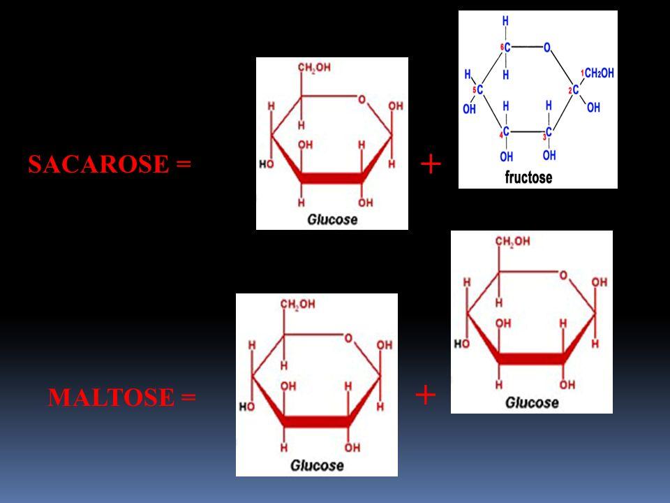 SACAROSE = + MALTOSE = +