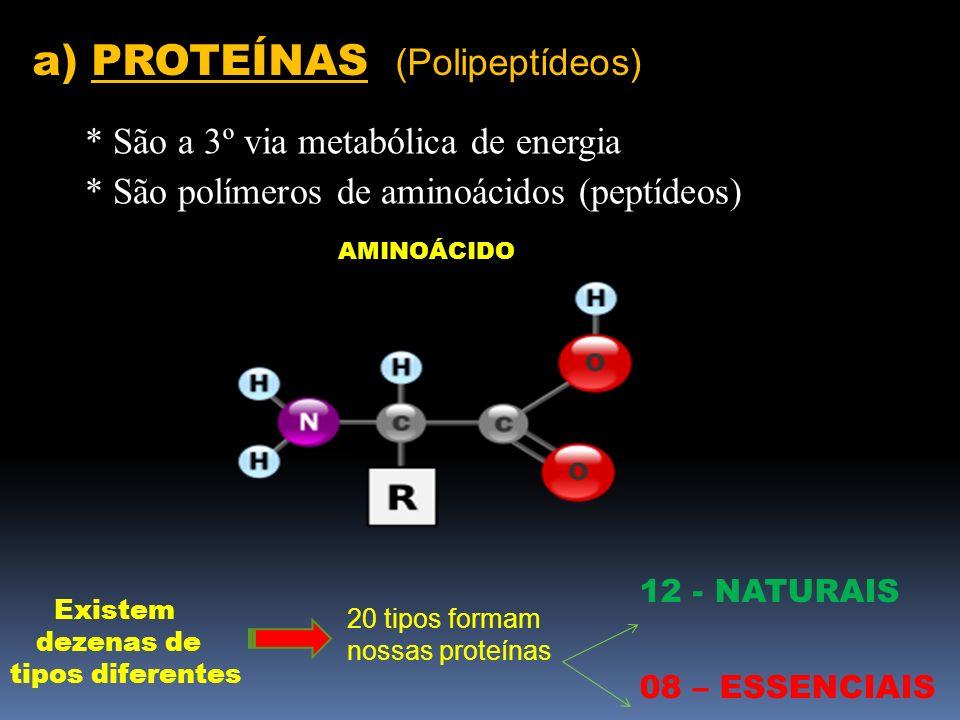 AMINOÁCIDO Existem dezenas de tipos diferentes 20 tipos formam nossas proteínas 12 - NATURAIS 08 – ESSENCIAIS a) PROTEÍNAS (Polipeptídeos) * São a 3º