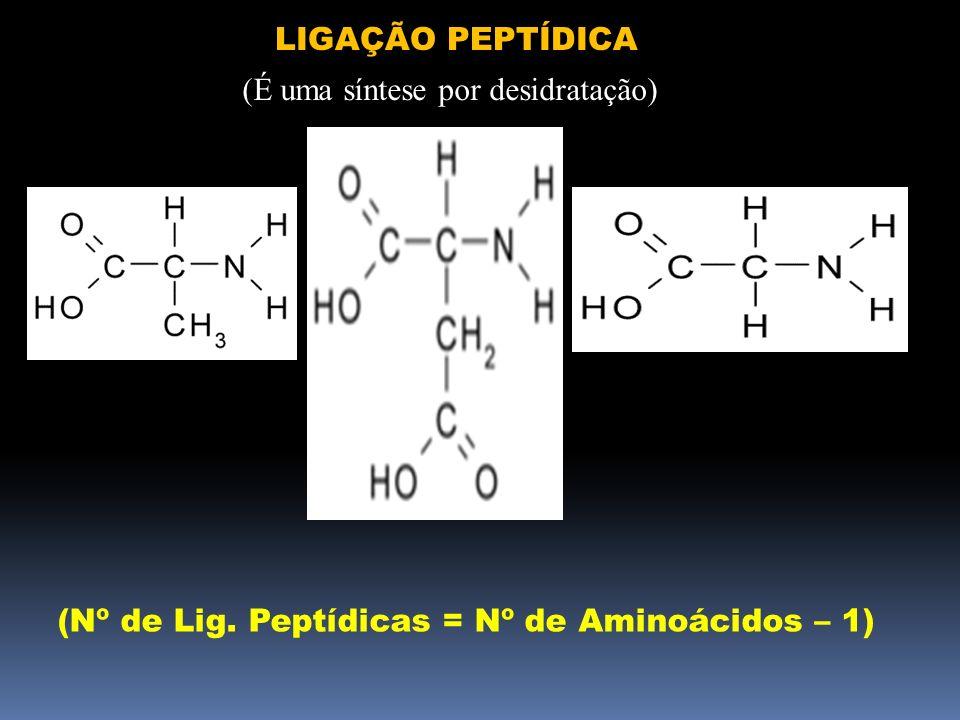 LIGAÇÃO PEPTÍDICA (É uma síntese por desidratação) (Nº de Lig. Peptídicas = Nº de Aminoácidos – 1)