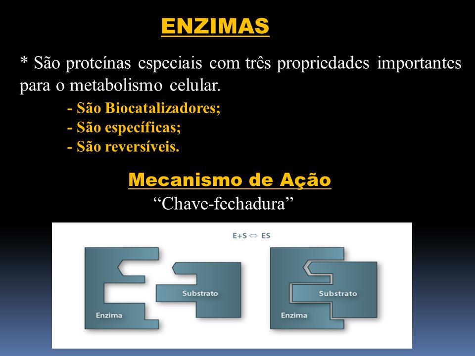 ENZIMAS * São proteínas especiais com três propriedades importantes para o metabolismo celular. - São Biocatalizadores; - São específicas; - São rever