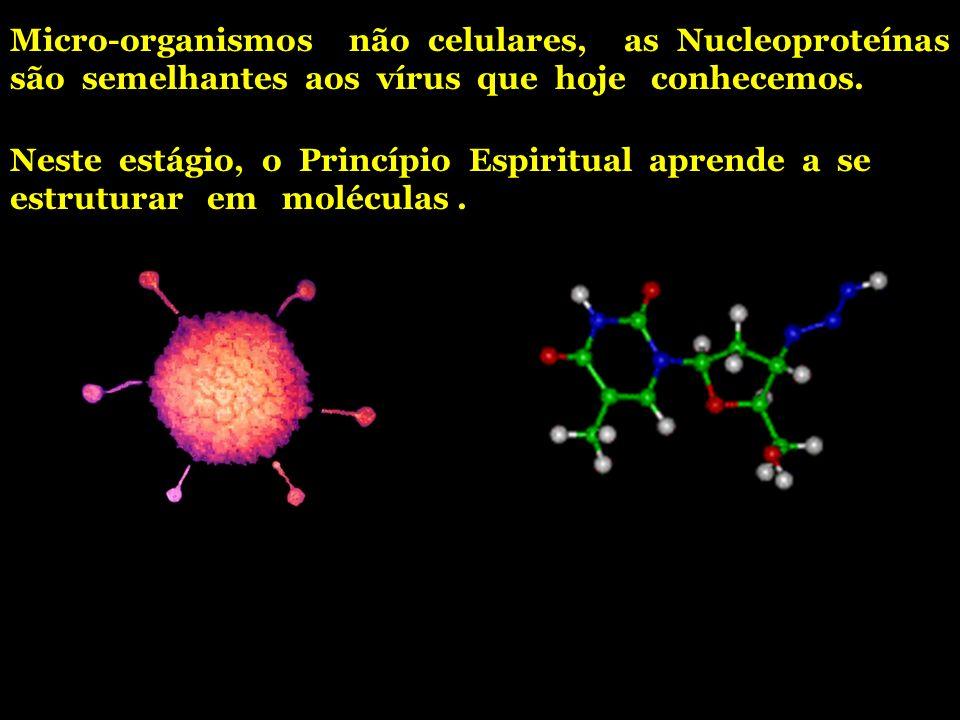 Micro-organismos não celulares, as Nucleoproteínas são semelhantes aos vírus que hoje conhecemos. Neste estágio, o Princípio Espiritual aprende a se e