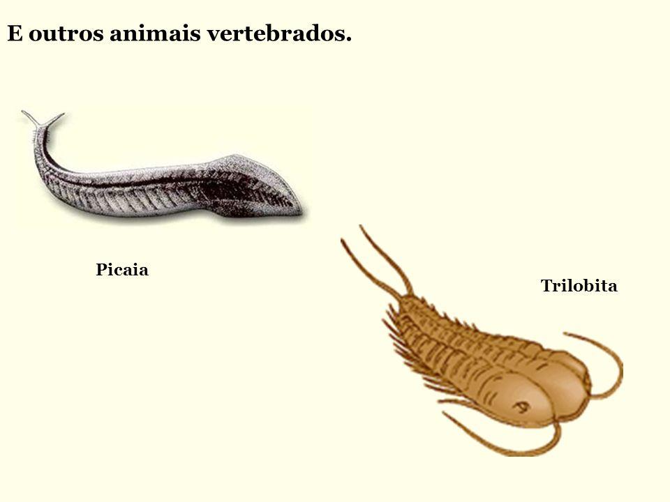 E outros animais vertebrados. Picaia Trilobita