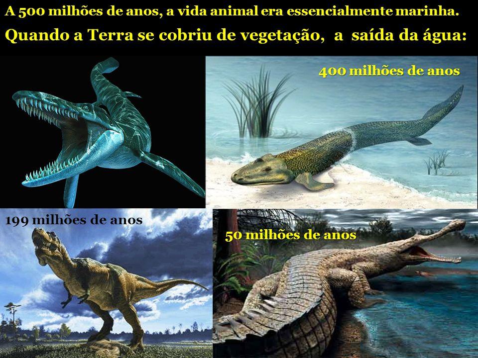 A 500 milhões de anos, a vida animal era essencialmente marinha. Quando a Terra se cobriu de vegetação, a saída da água: 400 milhões de anos 199 milhõ