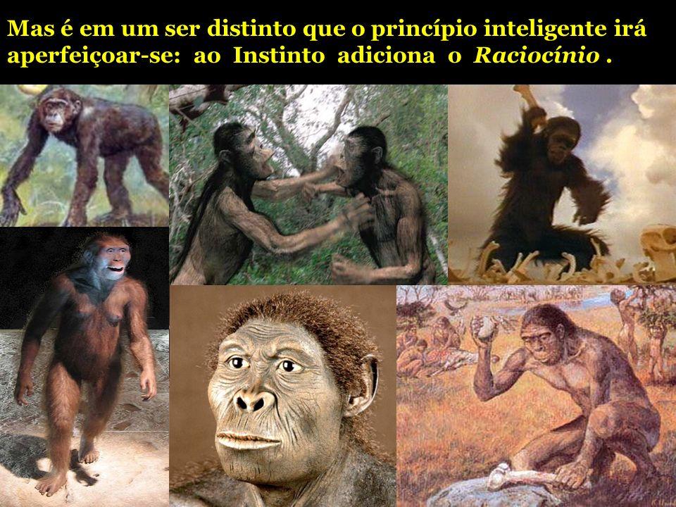Mas é em um ser distinto que o princípio inteligente irá aperfeiçoar-se: ao Instinto adiciona o Raciocínio.