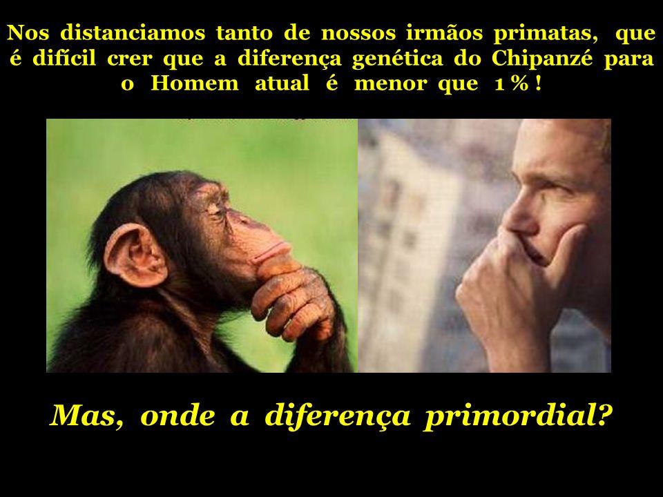 Nos distanciamos tanto de nossos irmãos primatas, que é difícil crer que a diferença genética do Chipanzé para o Homem atual é menor que 1 % ! Mas, on