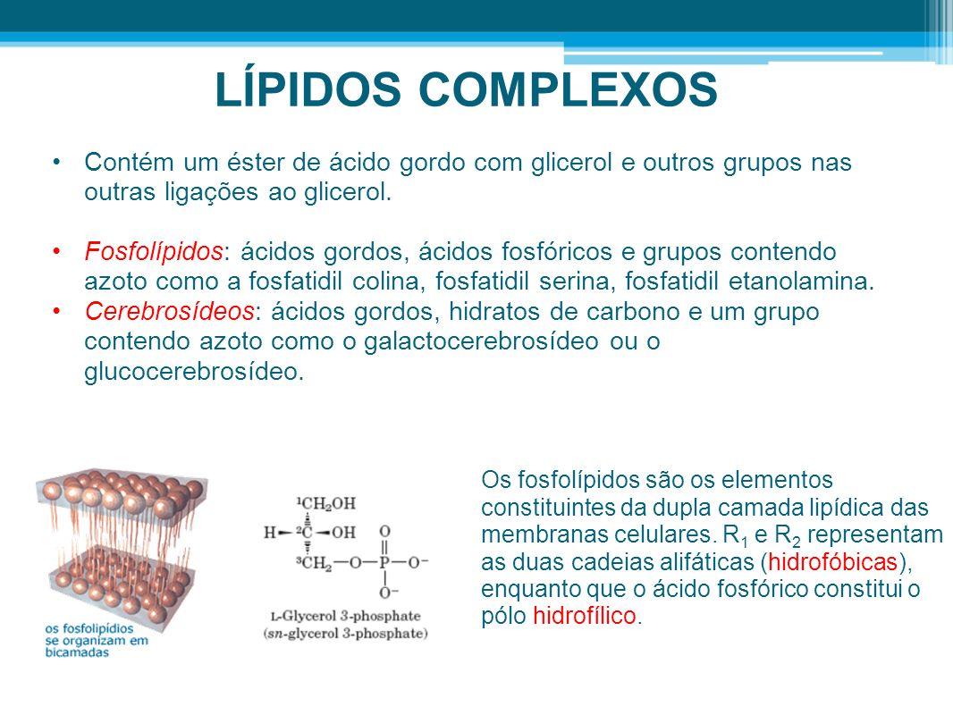 LÍPIDOS COMPLEXOS Contém um éster de ácido gordo com glicerol e outros grupos nas outras ligações ao glicerol. Fosfolípidos: ácidos gordos, ácidos fos