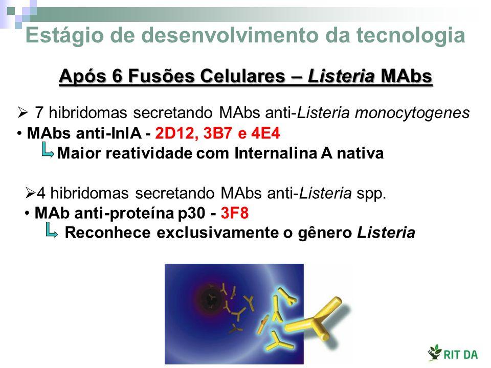 4 hibridomas secretando MAbs anti-Listeria spp. MAb anti-proteína p30 - 3F8 Reconhece exclusivamente o gênero Listeria MAbs anti-InlA - 2D12, 3B7 e 4E